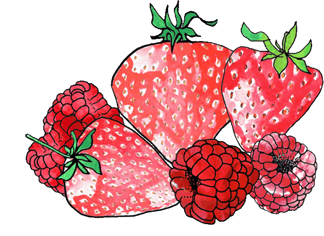 fruits-drawing