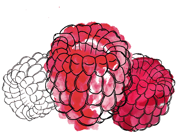 raspberry-drawing