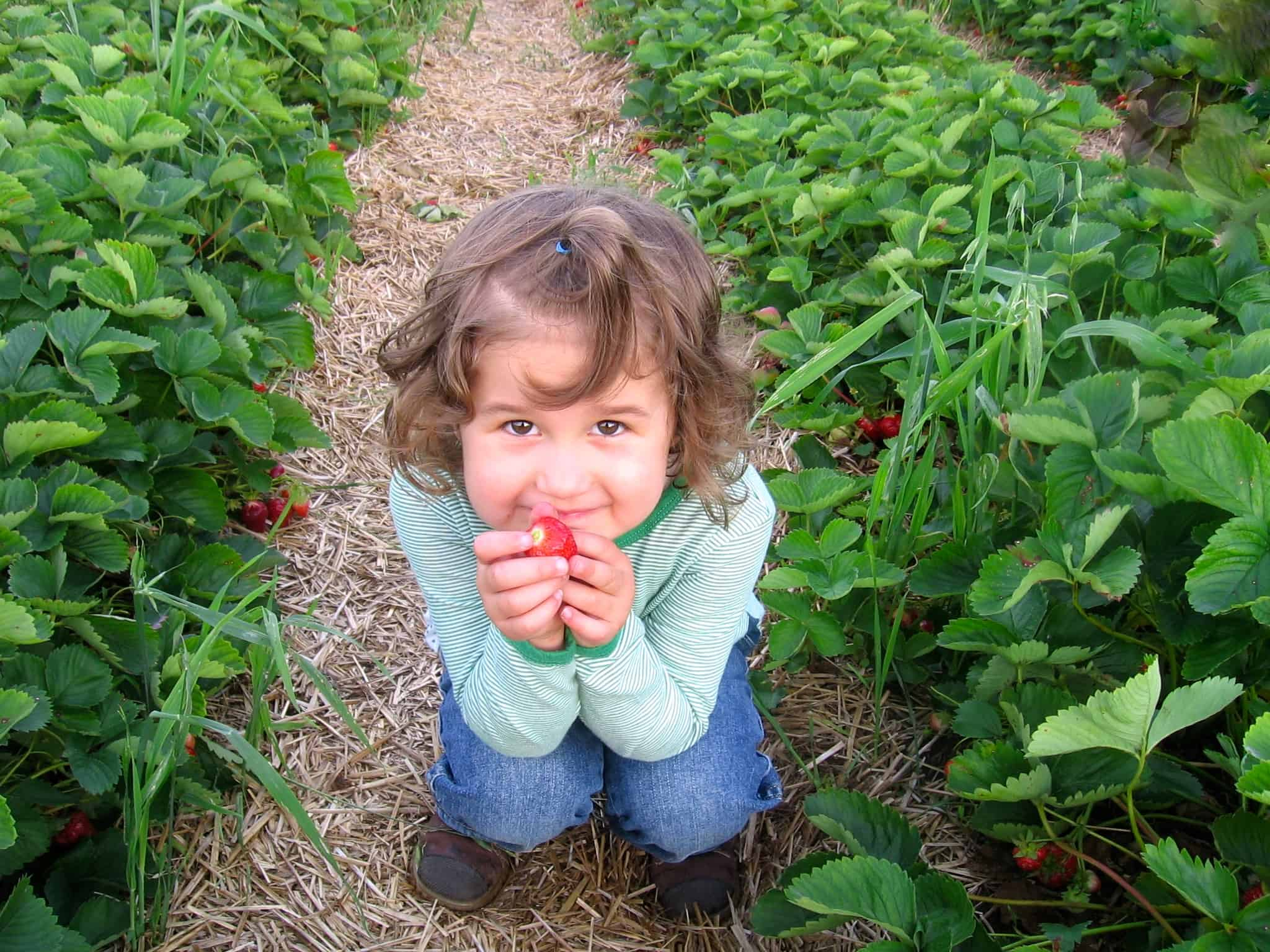 Viviane et fraise 2008 modifiée