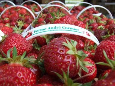 fraise cormier