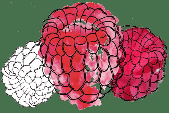raspberry-trio
