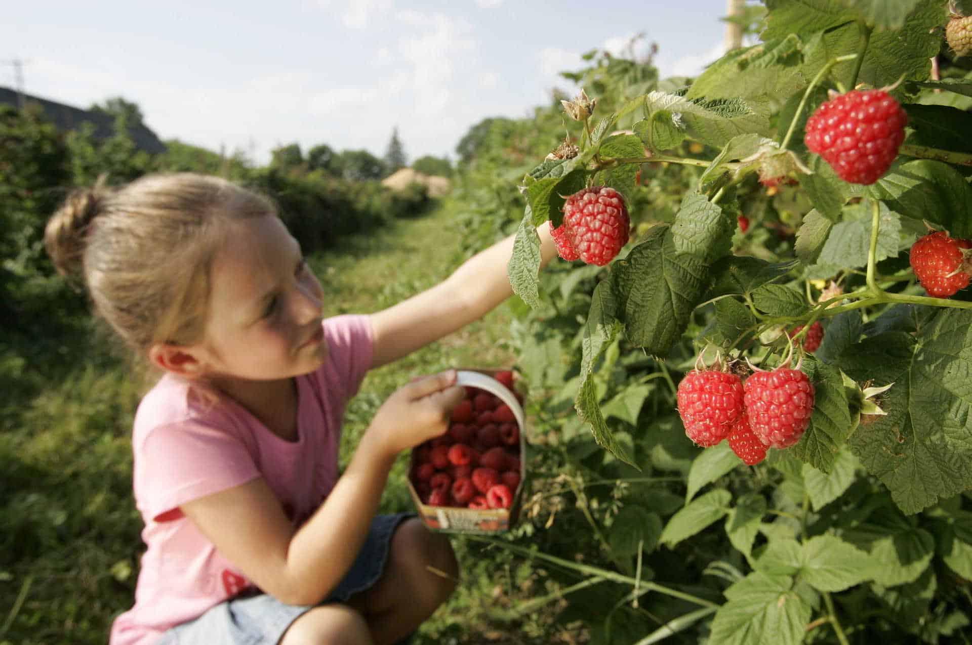 filette-fraises