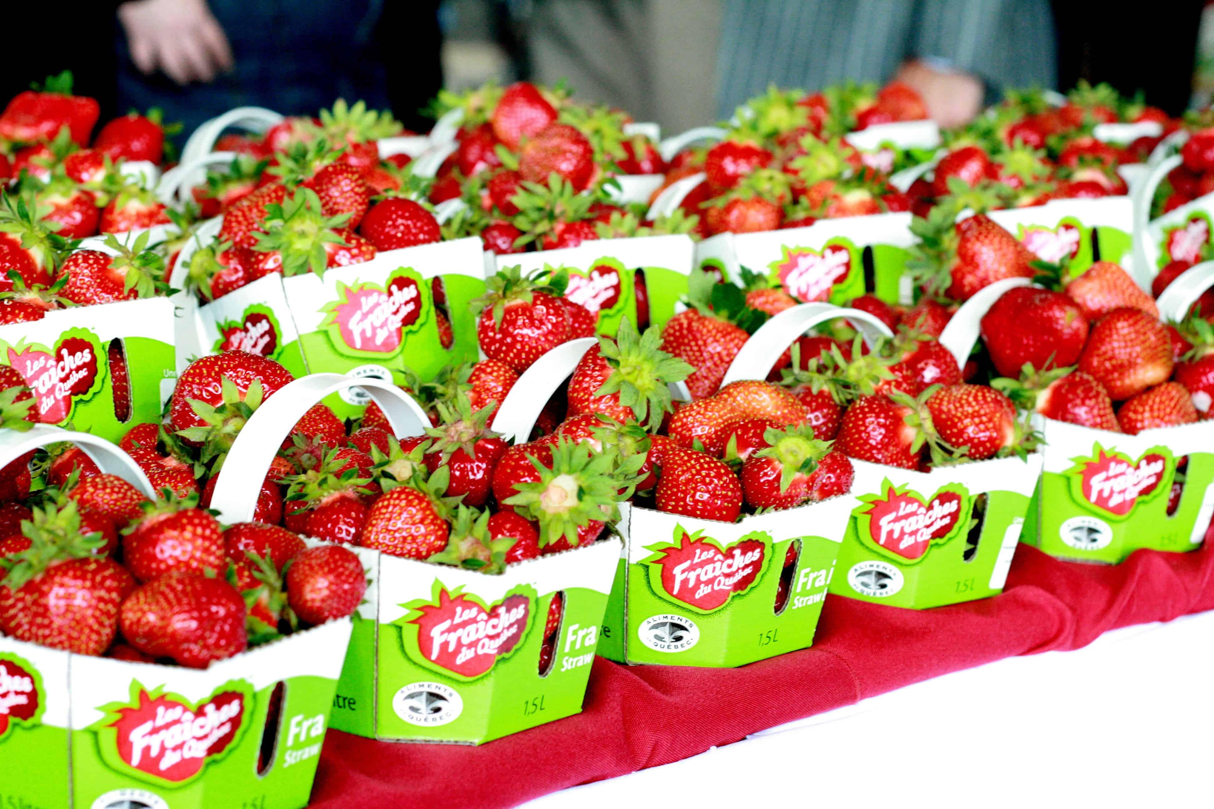 Résultats de recherche d'images pour «fraise quebec»