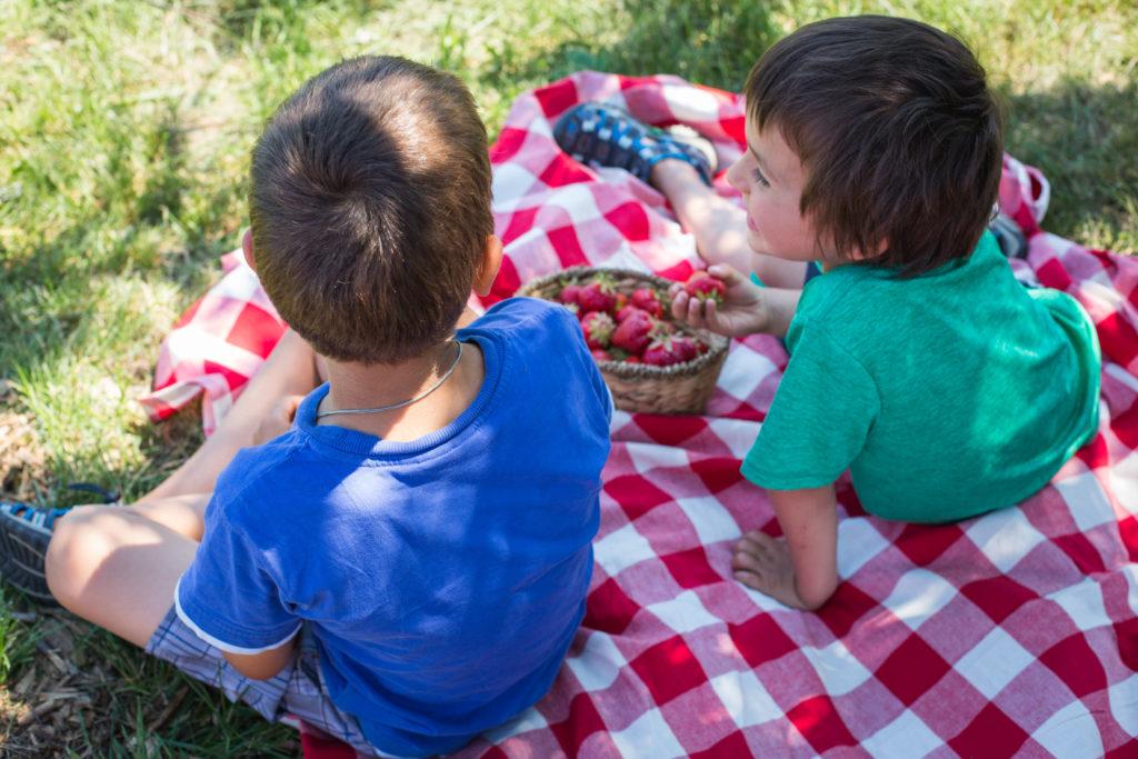 Deux enfants en pique-nique mange des fraises