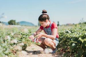 Une fille à l'autocueillette tient un panier de fraises