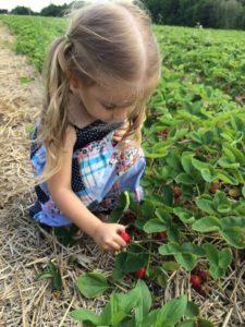 Petite fille à la cueillette de fraises