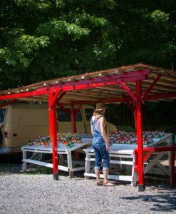 Une jeune femme achète des fraises dans un kiosque local